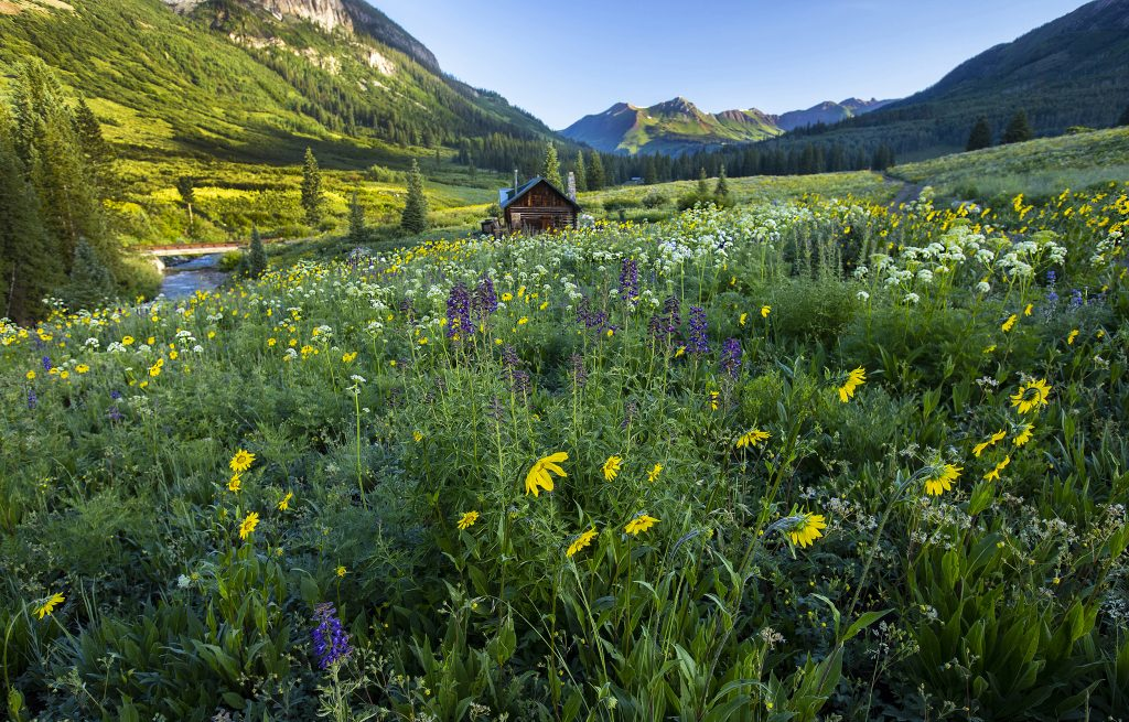 Southwest - 2021_07_06_gothic_road_wildflowers_cabin_177